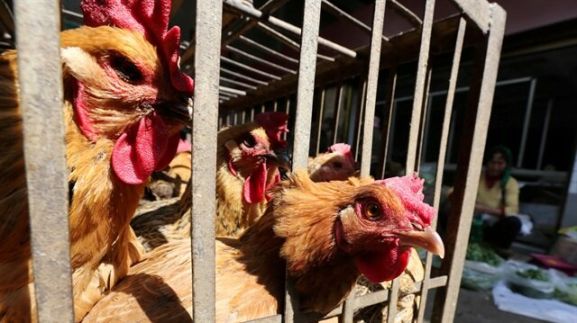 File Photo: Chickens are seen at a livestock market before the market asked to stop trading on March 1 in prevention of bird flu transmission, in Kunming, Yunnan province, China February 22, 2017. REUTERS