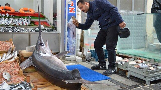 100 kilo ağırlığında, 2,5 metre uzunluğundaki balık büyük ilgi gördü.