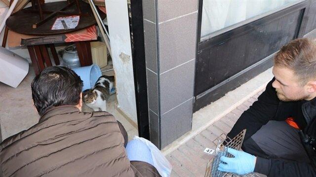 3 haftadır dükkanda mahsur kalan kedi savcılık kararı ile kurtarıldı.
