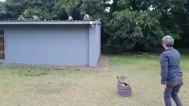 Tedaviden dönen maymunu kucaklayarak karşılayan ailesi