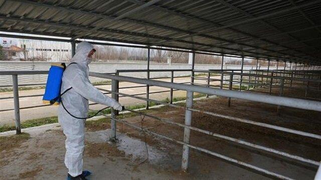 Yalova'da şap hastalığı nedeniyle karantina bölgesi oluşturuldu.