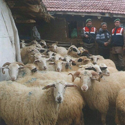Afyon'da kayıp 41 koyun bulunarak sahibine teslim edildi