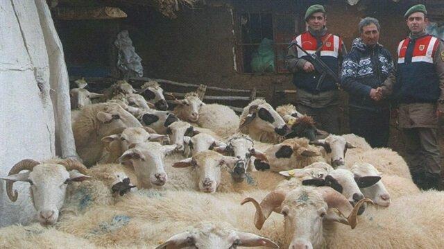 Afyon'da çalınan 41 koyun bulunarak sahibine teslim edildi