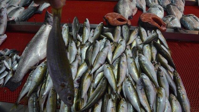 Trabzon'a balıklar Ege'den geldi