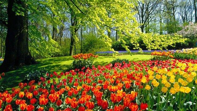 Bitki stabilizasyonu sayesinde bitkilerin su, toprak ve güneşe gereksinim duymadan canlı görünümünü yıllarca koruyabilecek.