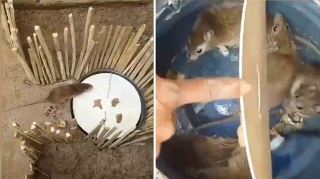 Yakaladığı farelere Karadeniz şivesiyle dublaj yapan adam kırdı geçirdi