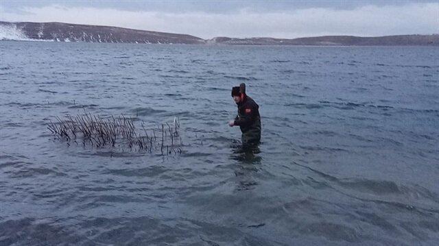 Aygır Gölü'nde zebra midye tehlikesi