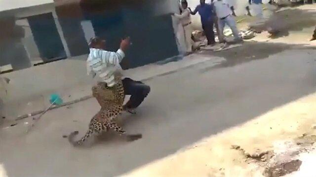 Leopar'ın saldırdığı adam ölümden döndü!