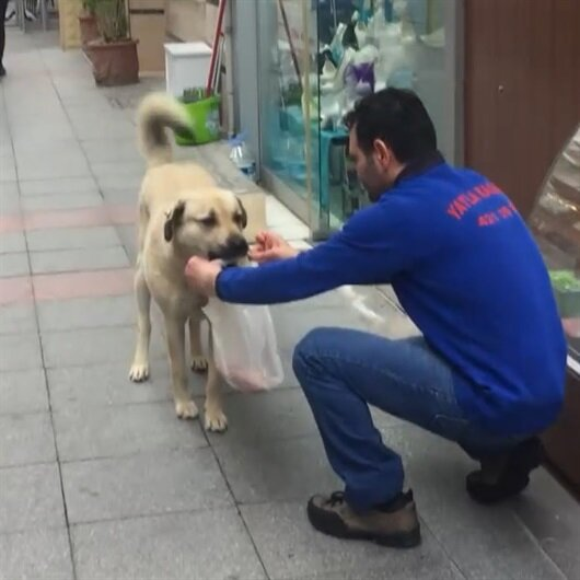 Güzel yürekli kasapla sokak köpeğinin dostluğu