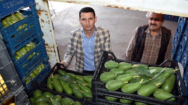 Don olayı ve yoğun talep avokado fiyatını yükseltti.