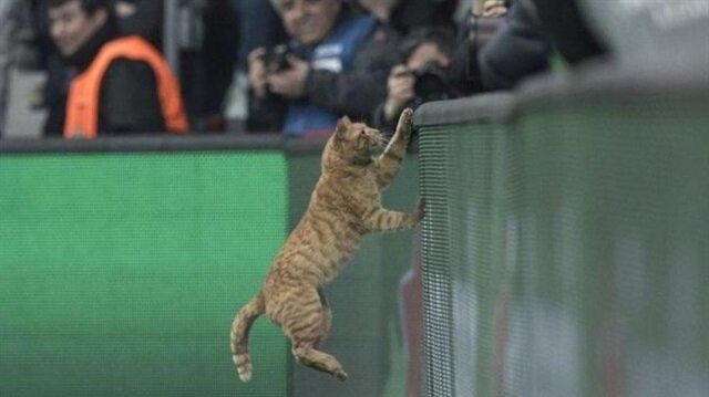 Beşiktaş kediyi arıyor