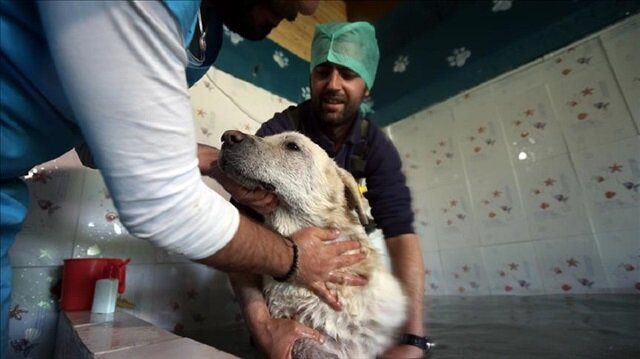 Healing thermal water cure for Istanbul strays