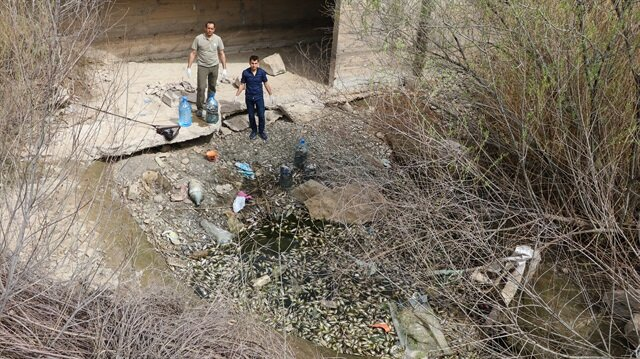 Mahsur kalan yaklaşık 10 bin balık başka bir alana tahliye ediliyor.