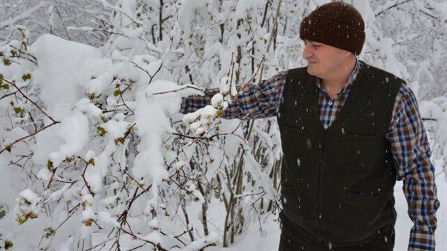 Kar yağışı fındık üreticilerini endişelendirdi