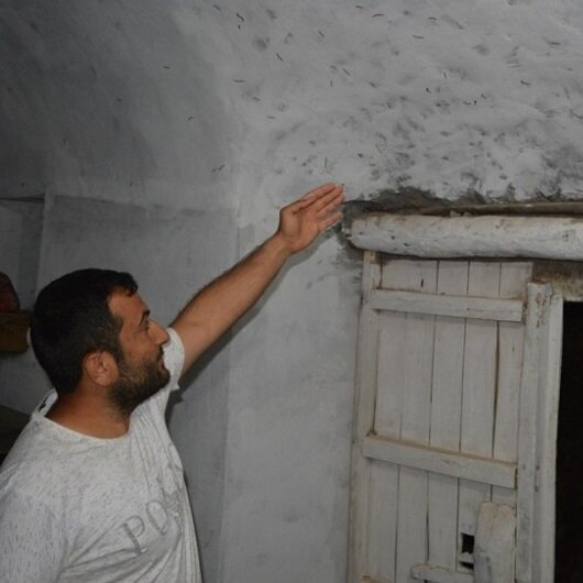 Kırkayakların istilasına uğradı: Korkudan uyuyamıyorlar