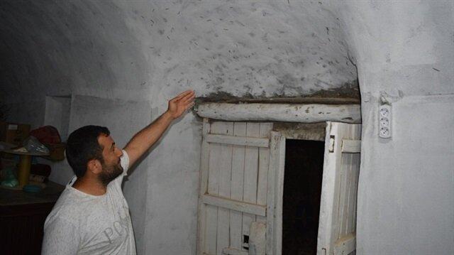 Kırkayakların istilasına uğrayan Ulaş köyü sakinlerinin çilesi bitmiyor.
