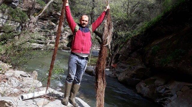 Eski hattan çıkarılan 2 metrelik ağaç kökü...