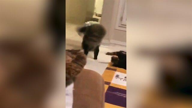 Parende atan kedi sosyal medyayı salladı