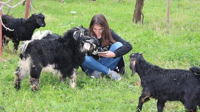 Koyun otlatırken kitap okuyan Kader Külliye'ye davet edildi