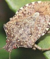 Soçi'de böcek istilası