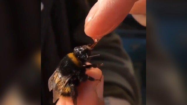 Eşek arısını elleriyle besledi