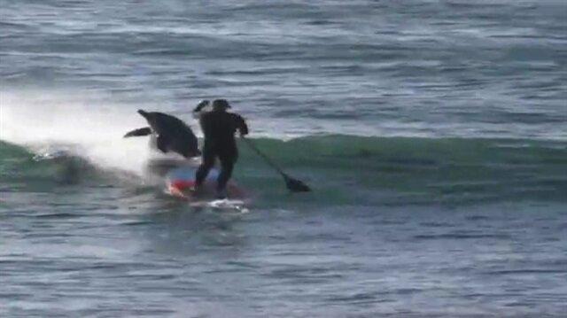 Yunus balığı önüne çıkan sörfçüyü böyle biçti