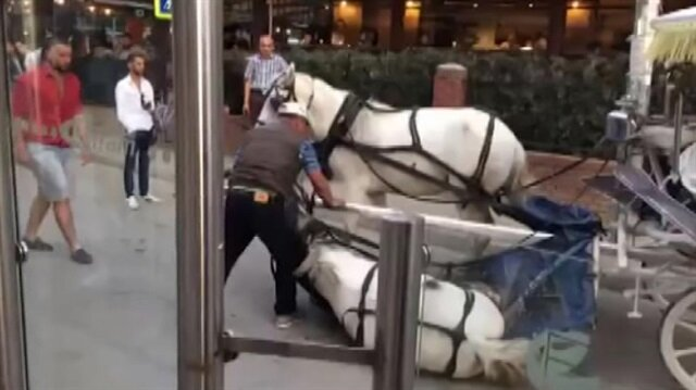 Faytona bağlı at böyle yere yığıldı