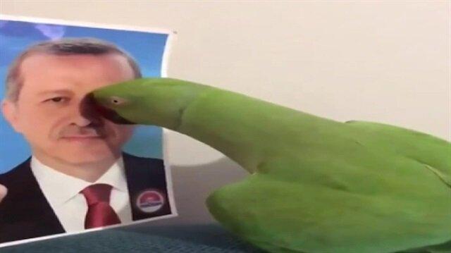 Cumhurbaşkanı Erdoğan'ı tanıyan papağan fenomen oldu