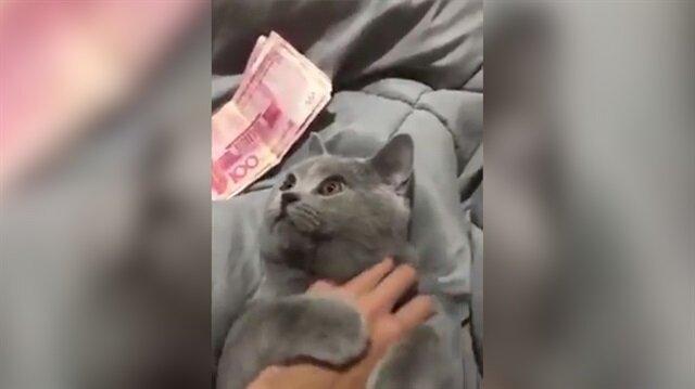 Bu kediyi sadece parayı veren sevebiliyor