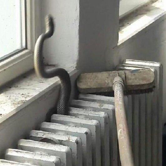Kalorifer peteğinden yılan çıktı okul boşaltıldı