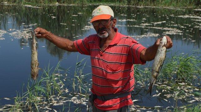 Toplu balık ölümlerinin üzerine inceleme başlatıldı.