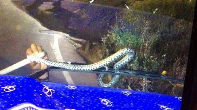 Sileceğe dolanan yılan polis ekipleri tarafından böyle kurtarıldı