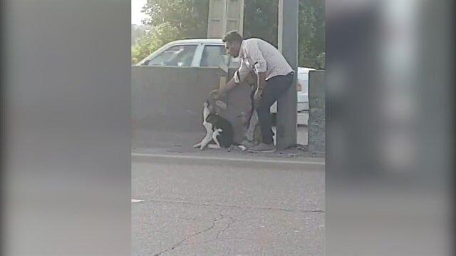 Kendi canını hiçe sayıp köpeği kurtaran koca yürekli adam