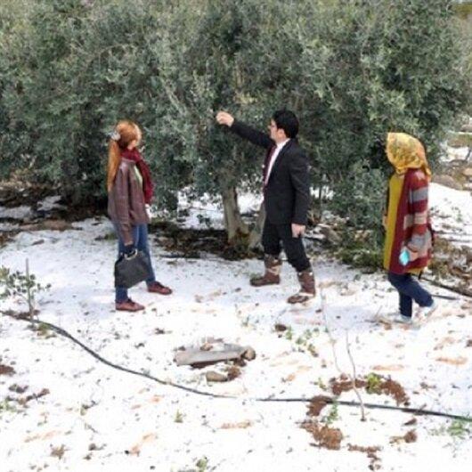 Mersin'de dolu yağışı tarım ürünlerine zarar verdi