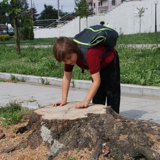 Belediye başkanından ağacın kesilmesine ağlayan çocuğa ağaç dikme sözü