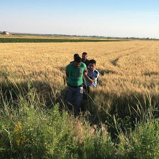 Buğday tarlasında yakalandı