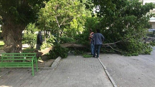 Kayseri'de ağacın dalları lüks aracın üzerine devrildi