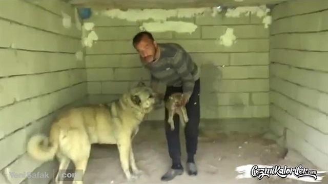 Elindeki yavru kurtla insanlık dersi veren adam