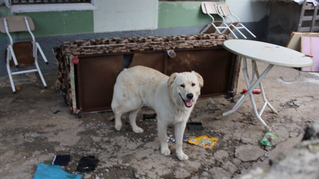 Köpeğin parçaladığı çekyattan para ve altınlar, polis merkezine götürüldü.