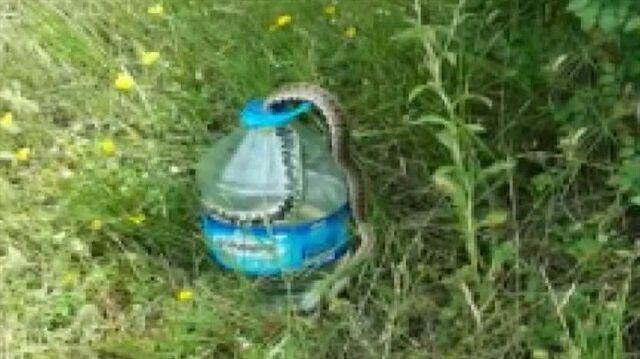 2 metrelik yılan, balığı avlamak isterken böyle avlandı