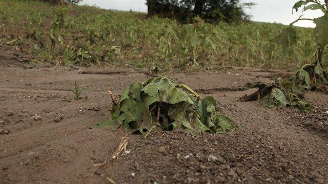 Yaklaşık 20 dakika etkili olan dolu ekili alanlara zarar verdi
