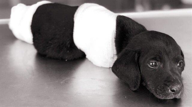 Bacakları kesilen yavru köpek ölmüştü.