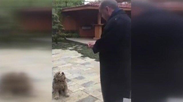 Cumhurbaşkanı Erdoğan sevimli köpeğe yiyecek verdi