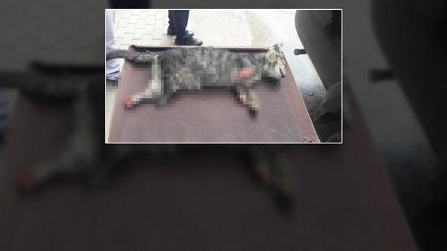 Sakarya'dan sonra şimdi de Bursa: Kedinin ayaklarını kestiler