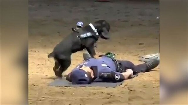 Police dog performs CPR to save police officer