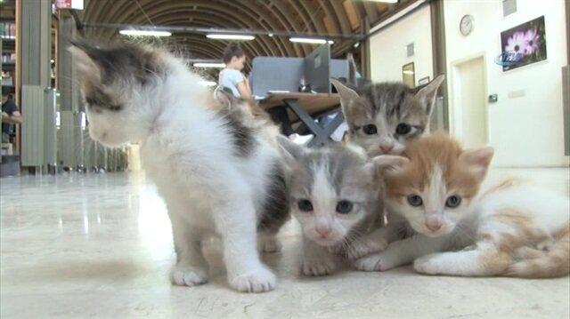 Millet Kıraathanesi'nde yaşayan kediler öğrencilerin maskotu oldu