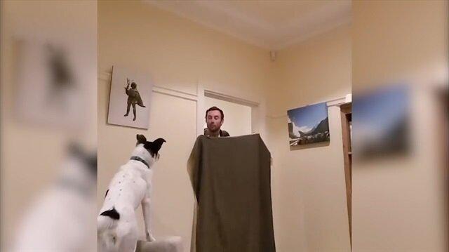 Köpeklerin kaybolma numarasıyla imtihanı