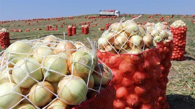 Soğanın tarla fiyatı açıklandı