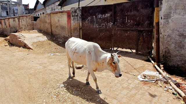 Muslim cattle traders, beef eaters and dairy farmers continue to be targeted by radical Hindus.