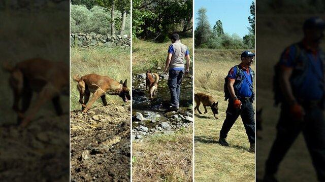 Arama kurtarma çalışmalarında güvenlik güçlerine bu konuda eğitim almış köpekler de katılıyor.